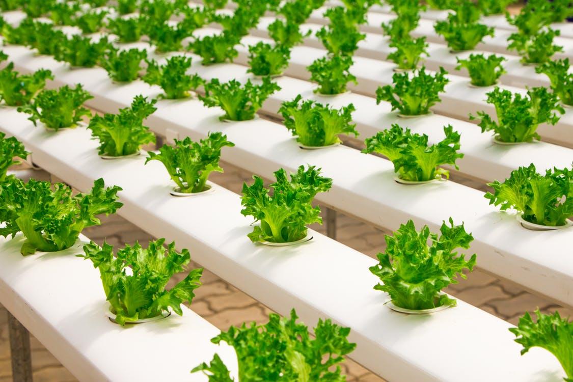 Global AgriSystem Pvt  Ltd